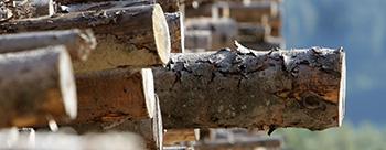 Holz ist preiswert