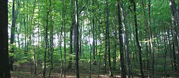 Holz bringt regionale Wertschöpfung