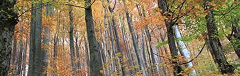 Holz ist umweltfreundlich